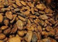 Ziarno kakao